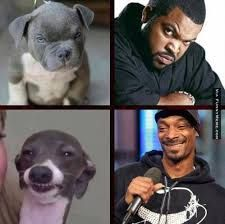 snoop dogg memes - Google Search