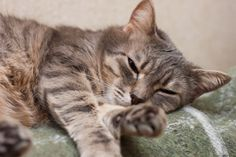 5 Symptoms of Liver Disease in Cats