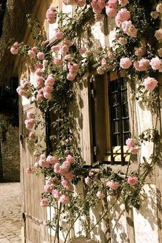 This is so gorgeous!  The climbing roses are one of my favorite climbers!