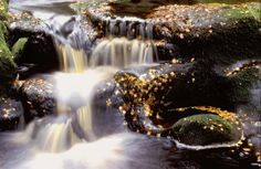 Smales Leap - Kielder Water and Forest Park  http://www.visitnorthumberland.com/kielder-water-forest-park