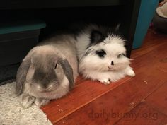 Bunnies relax together and want treats together - May 13, 2016 - More at today's Daily Bunny post: http://dailybunny.org/2016/05/13/bunnies-relax-together-and-want-treats-together/
