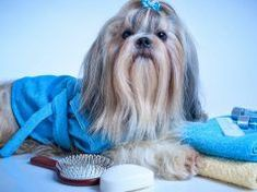 dog care,dog grooming tips,dog ideas,dog nail trimming,dog ear cleaner Puppy Care, Dog Care, Dog Grooming Tools, Dog Nails, Dog Shampoo, Shih Tzu Puppy, Best Dogs, Your Pet, Puppies