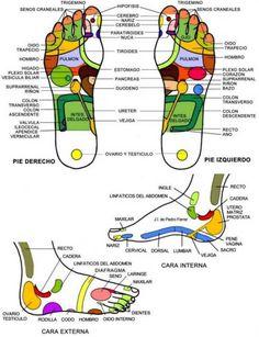 mapa de reflexologia podal