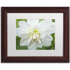 Trademark Fine Art 'White Dahlia' Canvas Art by Cora Niele, White Matte, Wood Frame, Size: 11 x 14, Multicolor