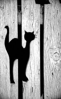 Vorgarten Zaun Black Cat by David Kay via back yard fence paiinting idea Heather Garre Black C Brick Fence, Pallet Fence, Front Yard Fence, Diy Fence, Backyard Fences, Wooden Fence, Garden Fencing, Fence Ideas, Fancy Fence