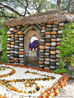 Come see what pumpkins looks like! Fall at the Dallas Arboretum is a magical sight and full of amazing pumpkin displays!