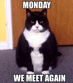 Mondays grrrr