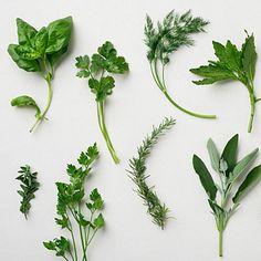 Sunset Magazine: 18 indispensable herbs - Our guide to growing and cooking with basic and gourmet herbs
