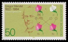 Mendel es el padre de la genética gracias a su afición a la estadística y la jardinería. 8 años cruzando guisantes amarillos y verdes dieron pie a las leyes de Mendel.  https://www.bbvaopenmind.com/mendel-y-las-bases-del-sorteo-genetico/?utm_source=materia&utm_medium=web&utm_content=pildora_redirect