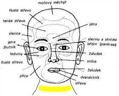 Diagnostická zóna jater a žlučníku se nachází mezi obočím nad kořenem nosu Medicine Book, Health And Beauty, Health Fitness, Akupresurní Body, Sport, Forks, Healthy, Medicine, Diet