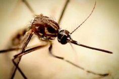 DF tem redução de 79% no número de casos confirmados de dengue - http://noticiasembrasilia.com.br/noticias-distrito-federal-cidade-brasilia/2015/02/06/df-tem-reducao-de-79-no-numero-de-casos-confirmados-de-dengue/