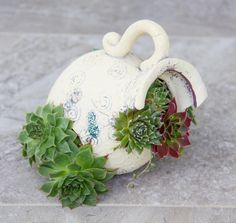 Succulents in broken jug