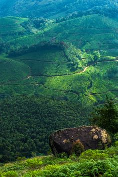 A morning shot from Munnar Kerala(Indian state) by Maneesh...