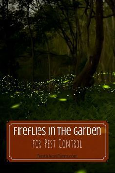 Whether you call them fireflies or lightning bugs, you probably have memories of running around with childlike glee and catching them in a jar as a kid. Find out how they can benefit the garden and how to protect this endangered species.