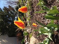 Flowers blooming in our backyard patio. We're ready for warm weather.