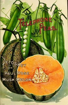 Telephone Peas and Petoskey or Paul Rose Musk Melon. Ferry Seed Annual (1900).