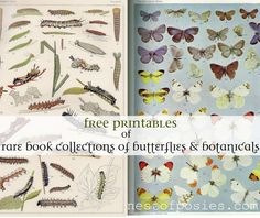 A Rare collection of Botanicals, butterflies & specimen vintage #printables via Nest of Posies
