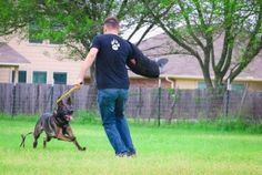 We use training methods that are based on an understanding of how animals learn and how dogs communicate with each other.