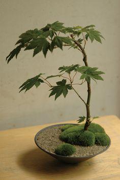 植物のうつわ.jpg (600×903)