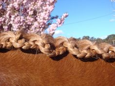 Scallop braid. Make a classic hunter braid, then pull the braid yarn through every third braid.
