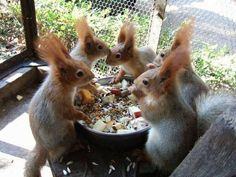 The Enchanted Cove, The gathering and the sharing of nuts!