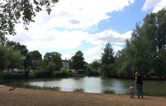 London photo: Barnes pond