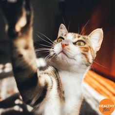 Strike a pose for #SelfieDay 🐱🐶🤳 #HealthyPetsInsurance #pets #cats #dogs #puppies #kittens #selfie