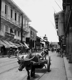 Slow but sure, on Calle Rosarioro, Manila, Philippines, early 20th Century
