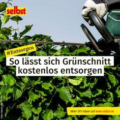Neben dem #Rückschnitt von #Hecken und #Bäumen gehört zur #Gartenpflege auch das #Unkraut #jäten oder #Rasen #mähen. Wo soll man da nur den ganzen #Grünschnitt #entsorgen? Home Appliances, Yard Maintenance, House Appliances, Appliances