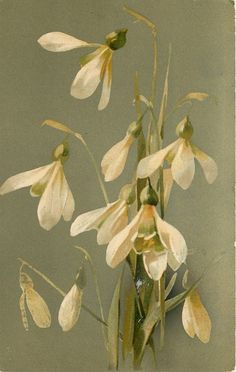 """Snow-Drops by Catherine Klein, 1907 postcard. Klein,"""" her trademark signature, stands for Catharina Klein. She is also referred to as Catherine Klein, but that's not a name she ever used herself Vintage Botanical Prints, Botanical Drawings, Botanical Art, Vintage Prints, Vintage Art, Illustration Botanique, Illustration Blume, Botanical Illustration, Art Floral"""