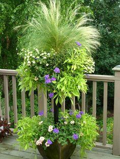 Ponytail grass (stipa), pale yellow million bells, lavender & white verbena, lacy sweet potato vine