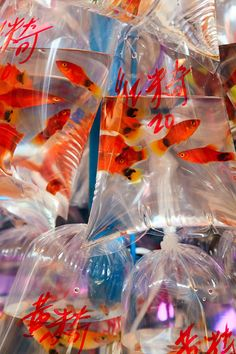 Dozens of varieties of fish for sale in the Goldfish Market, also known as the Tropical Fish Market, located on Tung Choi Street in Mongkok. Aesthetic Art, Aesthetic Pictures, Foto Art, Psychedelic Art, Pretty Pictures, Picture Wall, Wall Collage, Aesthetic Wallpapers, Techno