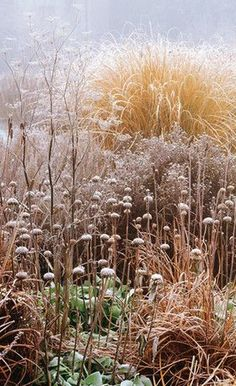 Gardening Autumn - frost covered plants - from the book Winter Garden: Create a Garden that Shines Through the Forgotten Season by Val Bourne - With the arrival of rains and falling temperatures autumn is a perfect opportunity to make new plantations Prairie Planting, Prairie Garden, Garden Cottage, Winter Plants, Winter Garden, Landscape Design, Garden Design, Ornamental Grasses, Plants