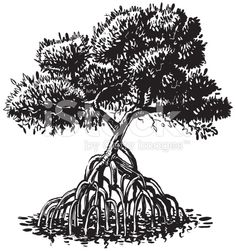 Mangrove Tree Ink Style Vector Cartoon Illustration royalty-free stock vector art