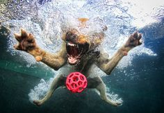 Dogs in the Swimming Pool Photo Series • dogs faces underwater.