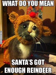 Santa's got enough Reindeer. Cute and funny kitty cat quotes. Tap to see more funny animals quotes! Crazy Cat Lady, Crazy Cats, Funny Animal Pictures, Funny Animals, Funniest Animals, Pet Pictures, Cute Animals With Funny Captions, Silly Pictures, Baby Animals Pictures