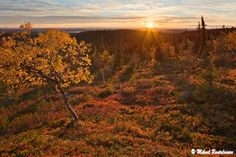 Autumn in Lapland - Somehow, this season in the North of Finland doesn't have a word in any other language, but we call it 'ruska'.