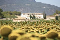 View of Valencian countryside