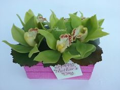 Green orchids!!  Happy Mothers Day!!!!!