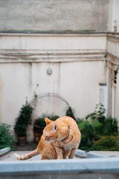 libby tims natural glamorous parisian flat