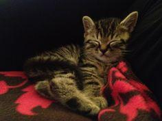 My new baby, Leonidas <3