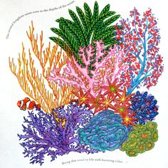 Coral Reef From Millie Marottas Animal Kingdom Colouring Book Marotta