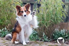 Mit täglichem Tricksen die Bindung zum Hund stärken