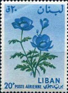 ◇Lebanon  1964 Anemone sp.