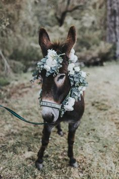 If you wonder what a donkey can eat, you can find all important feeding facts here. Take good care of your donkey with best information. Baby Donkey, Cute Donkey, Mini Donkey, Baby Cows, Baby Elephants, Elephant Baby, Farm Animals, Animals And Pets, Funny Animals