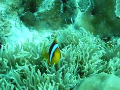 Wonders of Oceania  PALAU REEFS