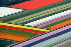Une merveille naturelle créée de main d'homme: depuis les airs, les vastes champs de tulipes aux Pays-Bas font l'effet d'un patchwork aux couleurs vives.