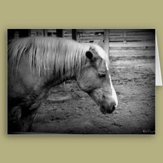 Lonely Pony Greeting Cards