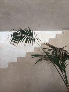 Life As A Water Element - loq-journal: Philip Dixon House Dixon Homes, Plant Texture, Home Decoracion, Green Plants, Planting Flowers, Plant Leaves, Web Design, Scandinavian Design, Decoration