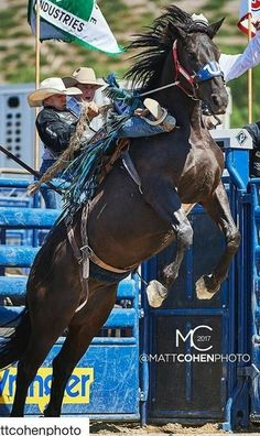 Rodeo Cowboys, Real Cowboys, Cowboy And Cowgirl, Cowgirl Style, Animals And Pets, Cute Animals, Cowboy Photography, Broncos, Bucking Bulls